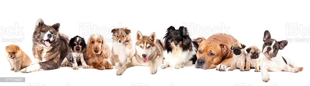 Different breeds of Group dogs stock photo