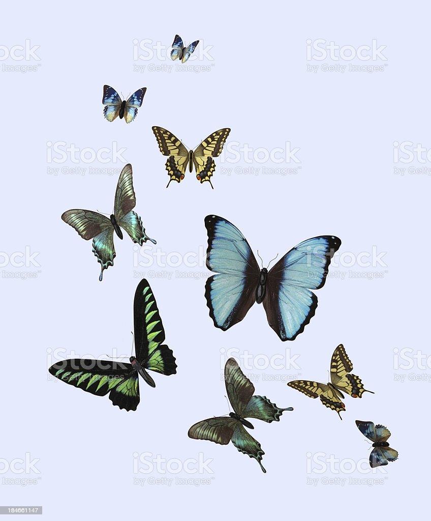 Different Butterflies stock photo