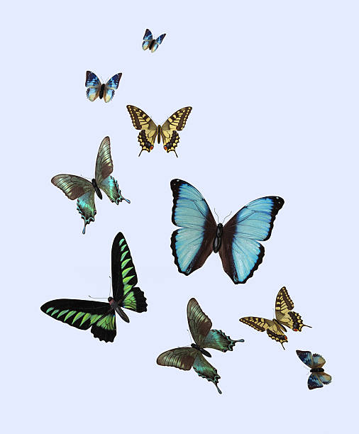 different butterflies - swarm of insects stock photos and pictures