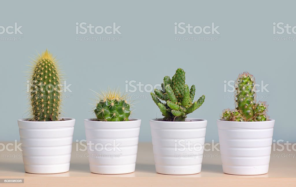 Different  cactus in pots stock photo