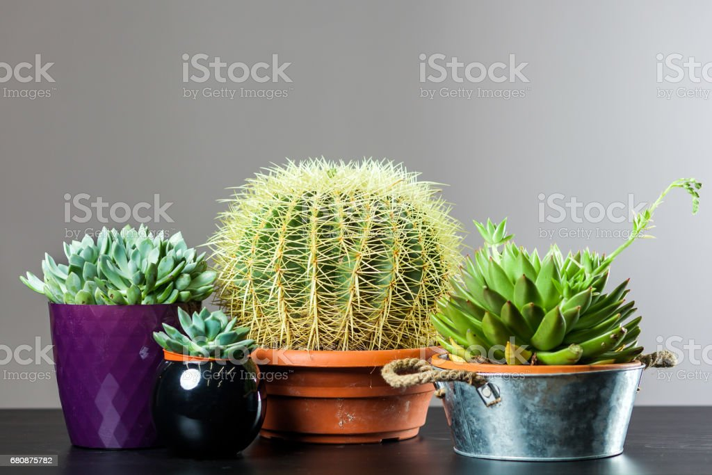 different cactus in pots royalty-free stock photo