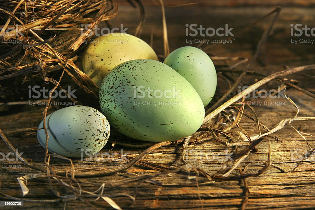 Different colored large and small eggs in a nest at the barn royalty-free stock photo