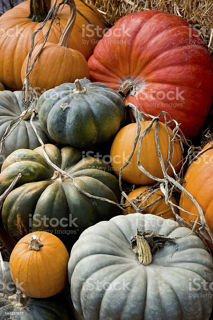 Different colored pumpkins at autumn harvest stock photo