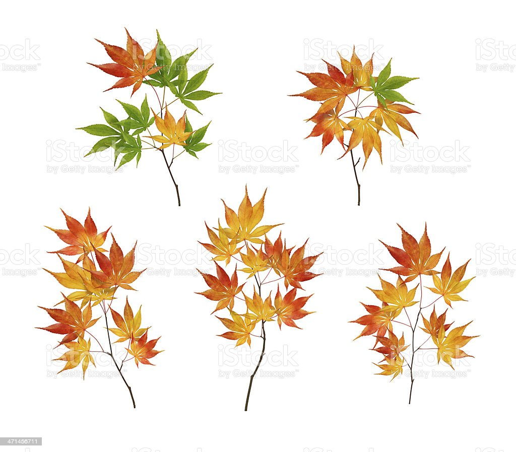 Different Colorful Autumn Branches royalty-free stock photo