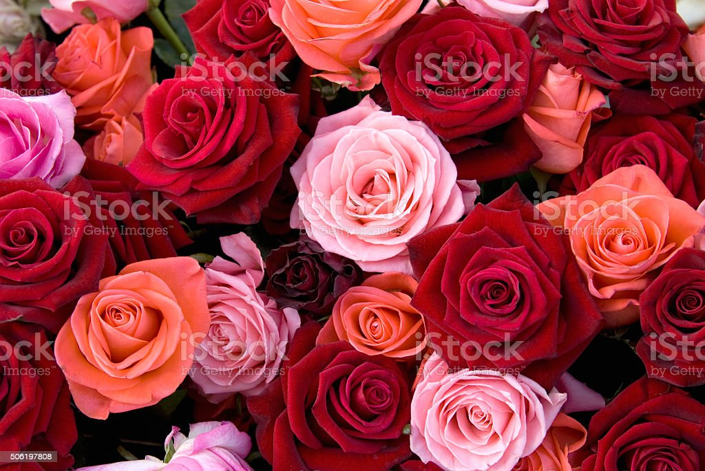 Different colors of roses stock photo