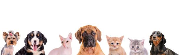 Gatos de diferentes dogsand aislados - foto de stock