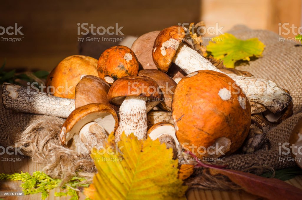 different edible mushrooms stock photo