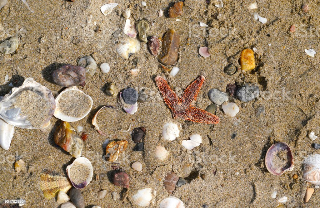 Different empty sea shells and starfish on sand in Marmara Sea royalty-free stock photo