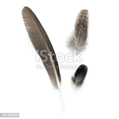 1065862132 istock photo different feathers isolated on white 941009560