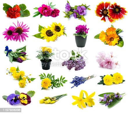 istock Different flowers in colleges on white background 1197658098