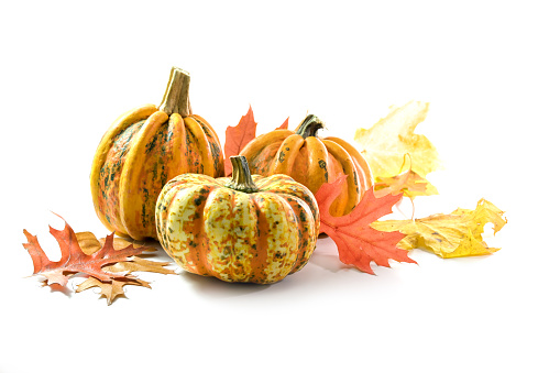 Different food pumpkins or squashes for Halloween or Thanksgiving and colorful autumn leaves, isolated on a white background with copy space, selected focus, narrow depth of field