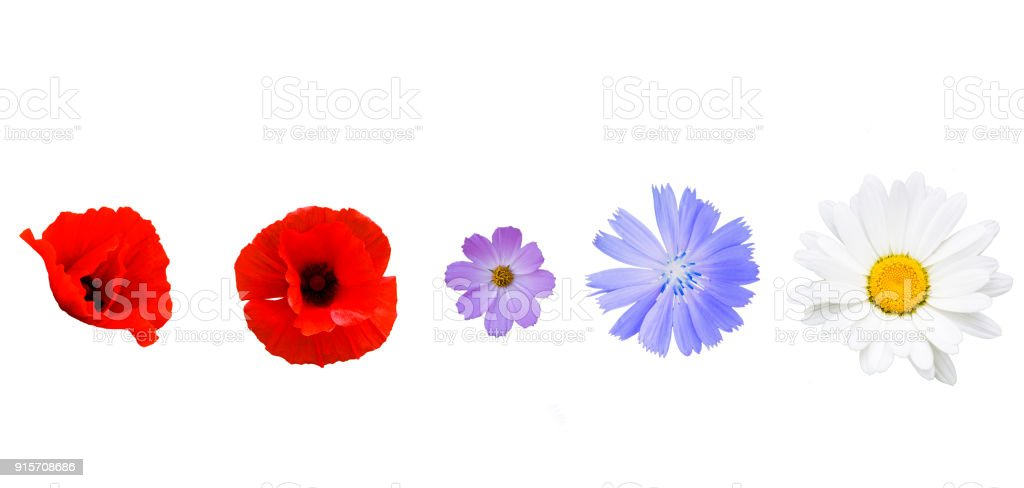 Different garden flowers on white background royalty-free stock photo