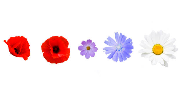 Different garden flowers on white background stock photo