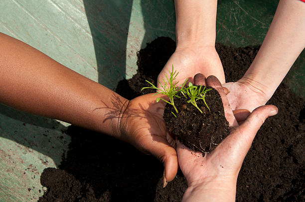 different hands holding seedling stock photo