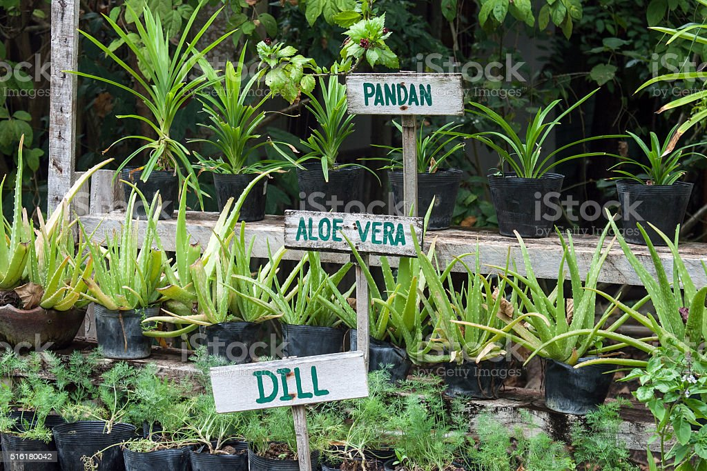 Different herbs in a garden stock photo