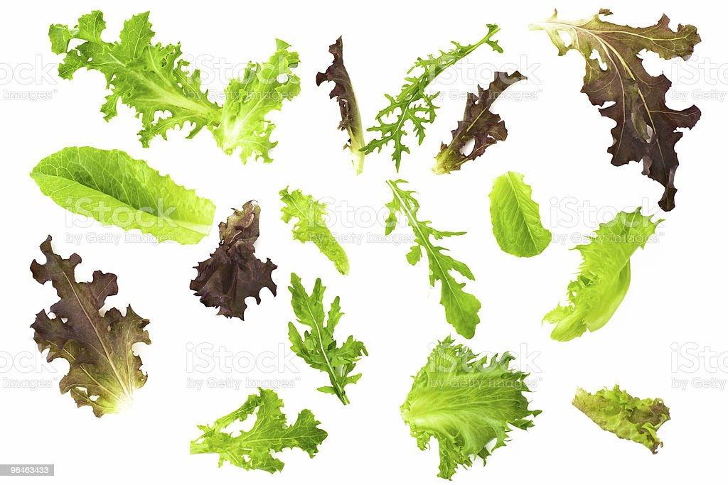 Different isolated fresh salad leaves royalty-free stock photo