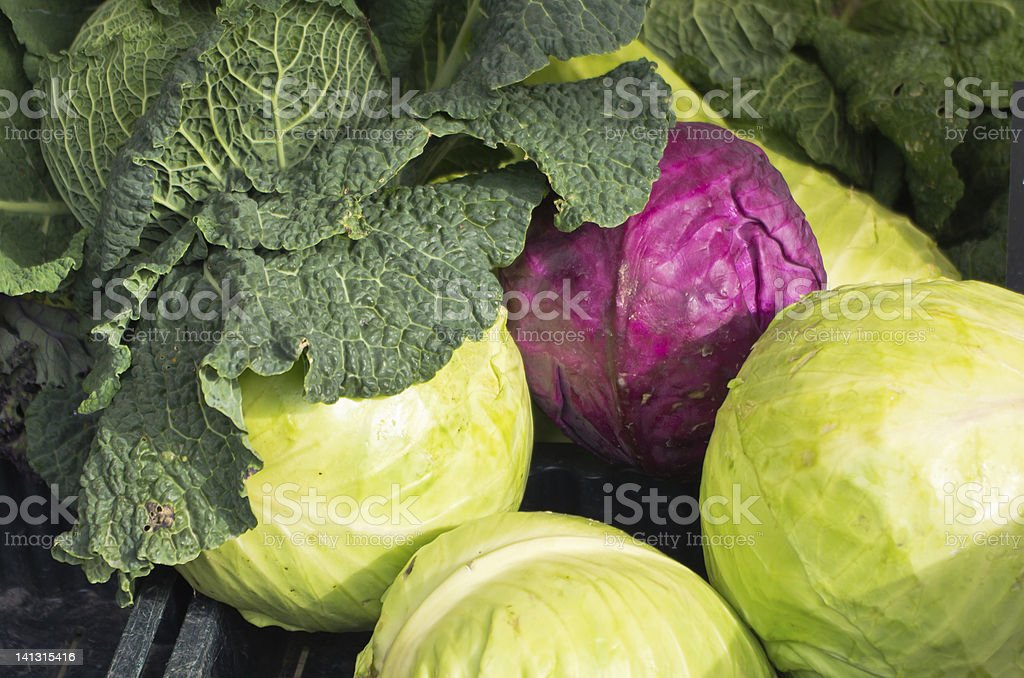 Different kind of fresh harvested cabbage in fall. stock photo