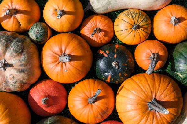 Different kind of pumpkins closeup Different kind of pumpkins closeup. Halloween and autumn background pumpkin stock pictures, royalty-free photos & images