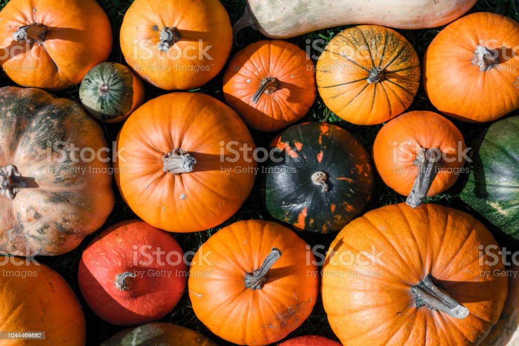 Different kind of pumpkins closeup stock photo