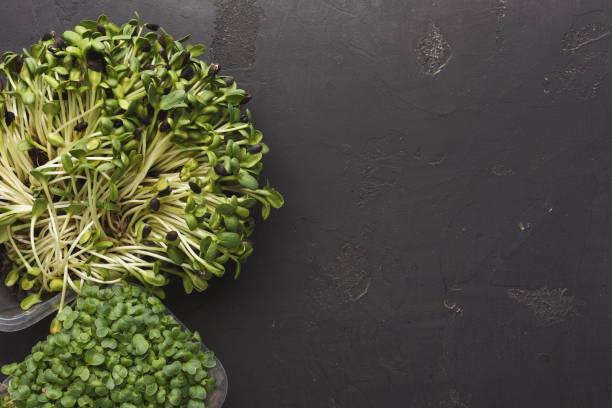 olika typer av mikro greener - pea sprouts bildbanksfoton och bilder