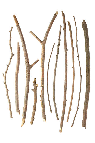 different kinds of sticks on a white background - twijg stockfoto's en -beelden