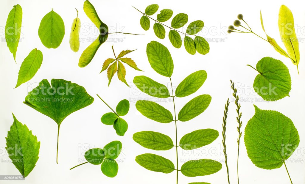 Different leaves stock photo