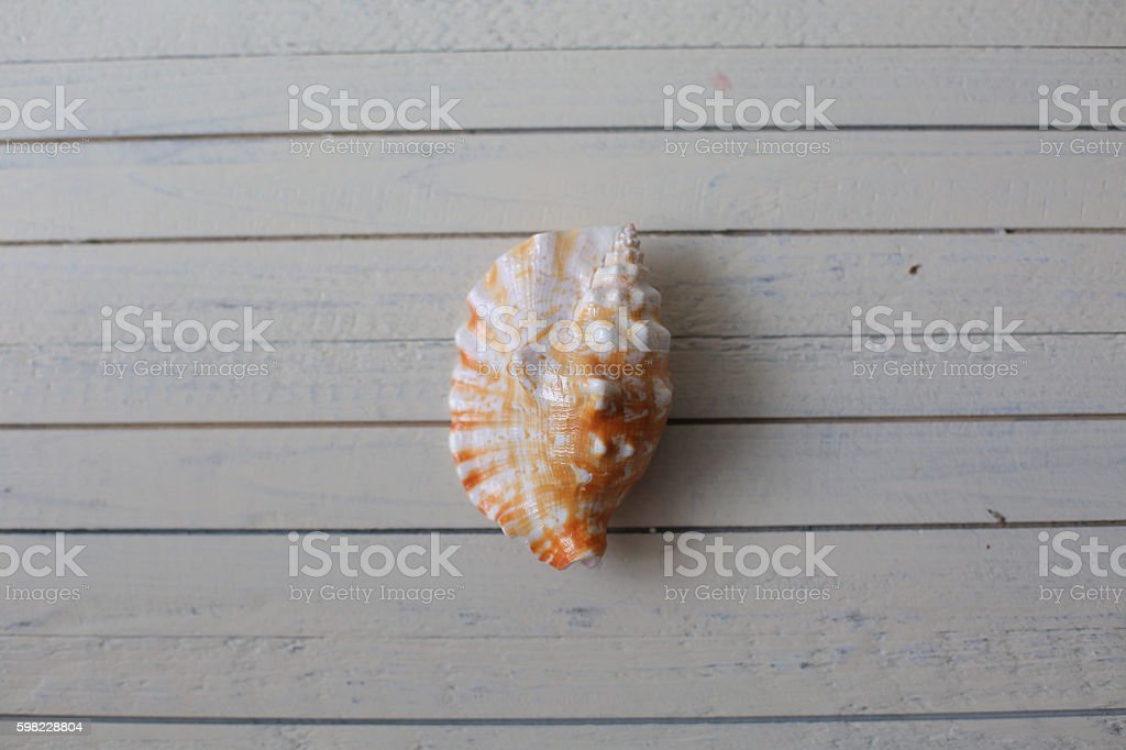 Different marine items on white painted wooden background. foto royalty-free