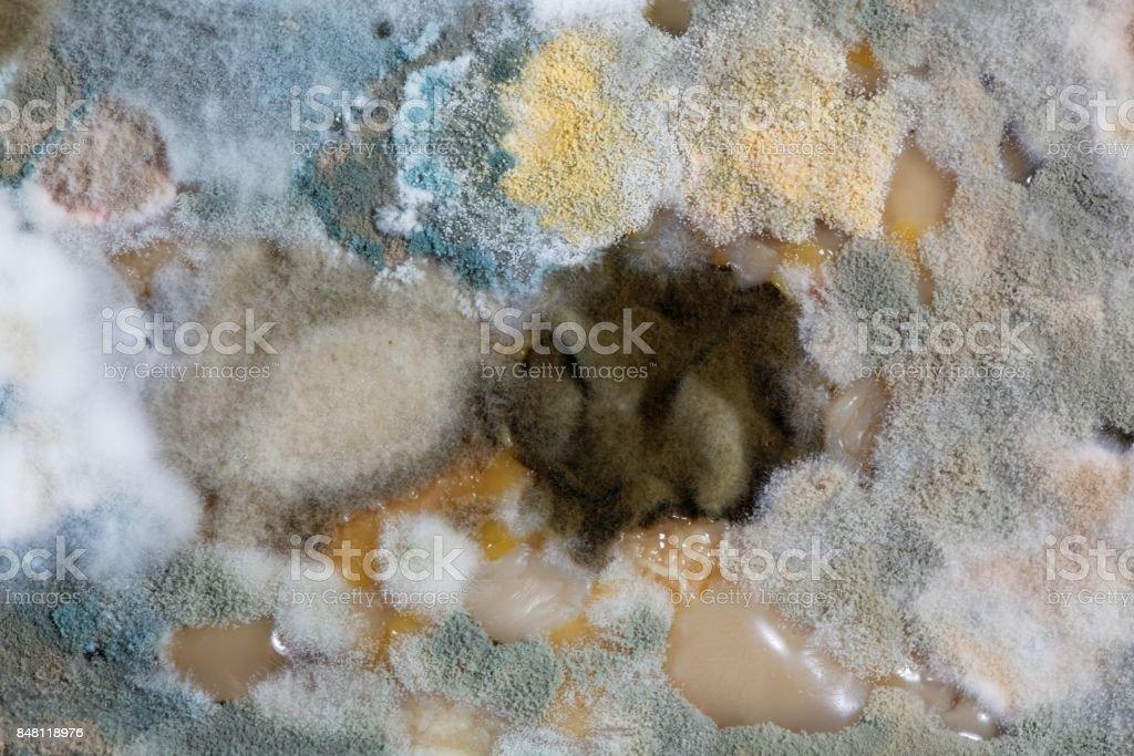 Different mold fungi stock photo
