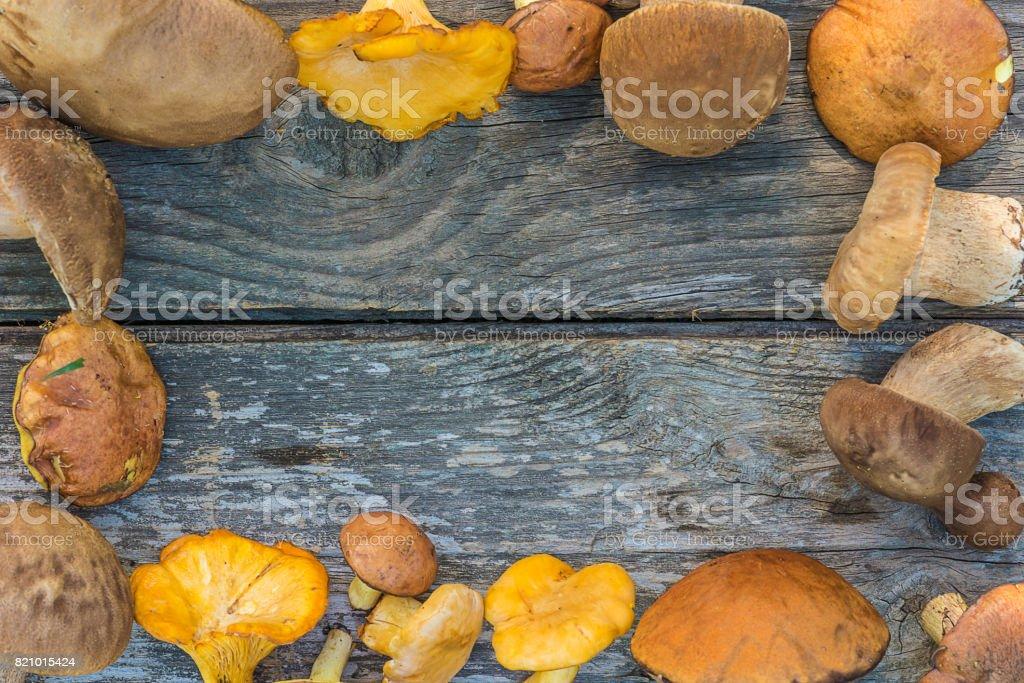 different mushrooms frame stock photo