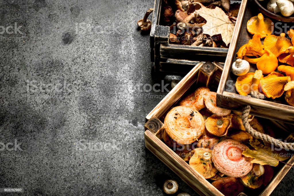 Different mushrooms in a boxes. stock photo