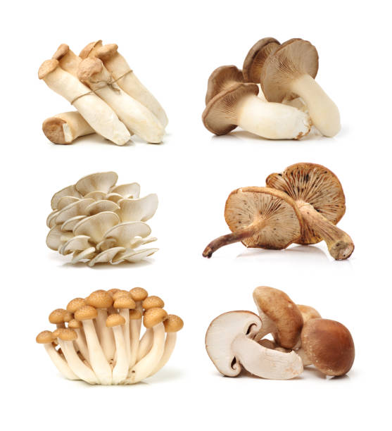 different mushrooms on a white background - fungus stock pictures, royalty-free photos & images