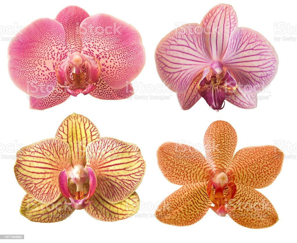 different orchids royalty-free stock photo