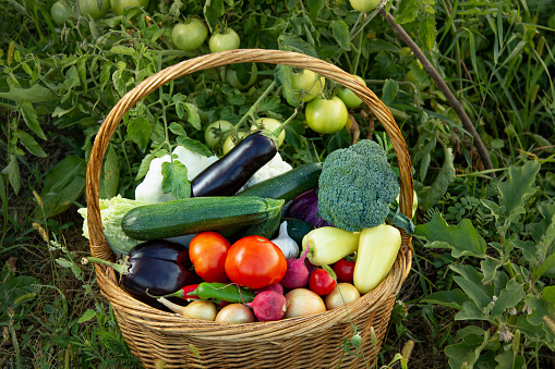 Different Organic Fruits and vegetables in basket on grass background.