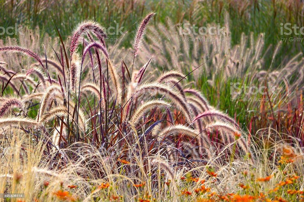 Verschiedene dekorative Wind – Foto
