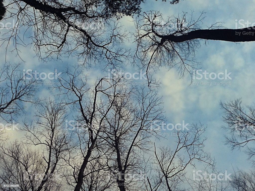 A Different Perspective royalty-free stock photo