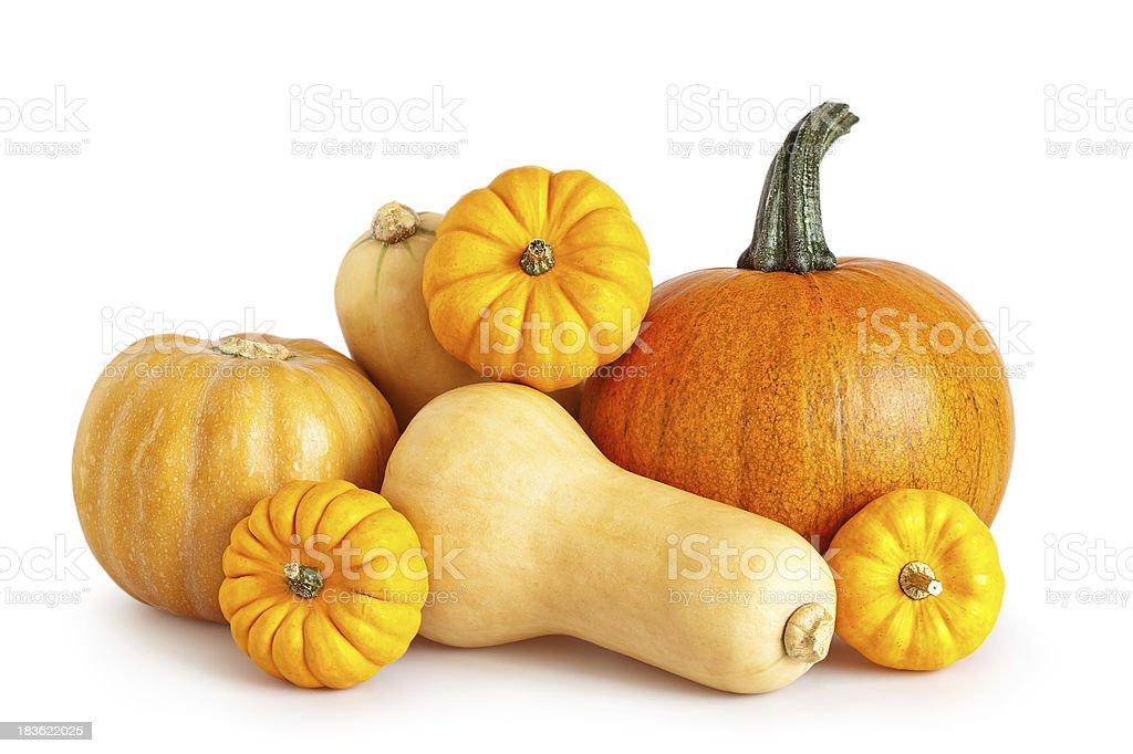 different pumpkins stock photo