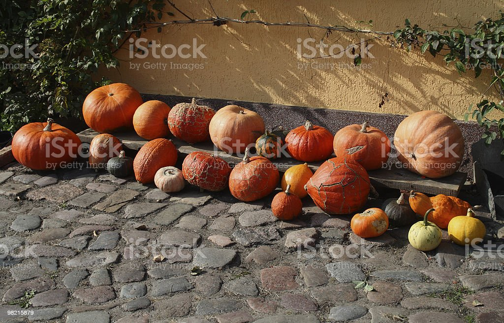 Different Pumpkins royalty-free stock photo