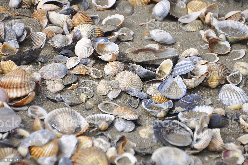 Different shells on a sand beach background. royalty-free stock photo