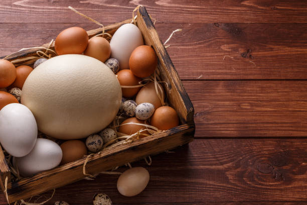 Different size eggs on a straw in a box, place for wording stock photo