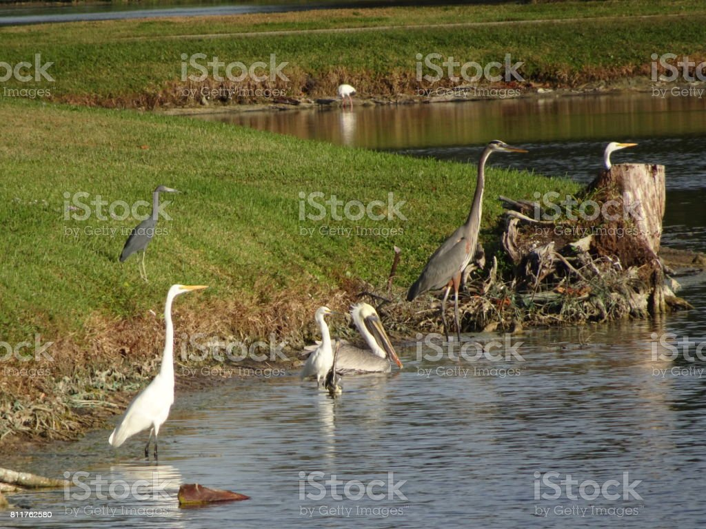 Different Swamp Birds Relaxing Stock Photo & More Pictures