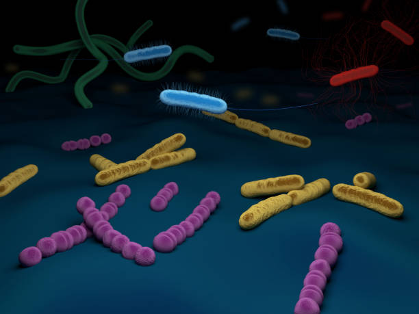 Different types of bacteria stock photo