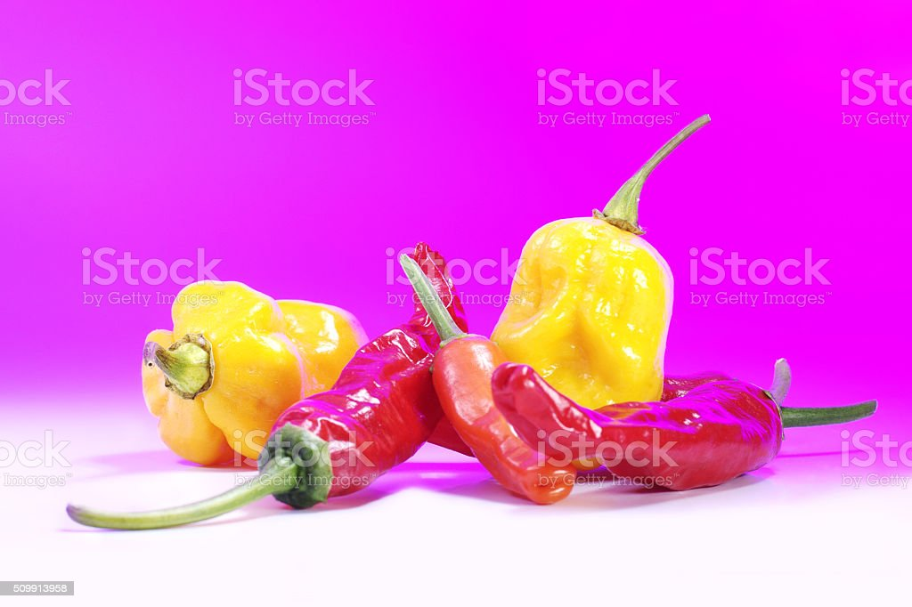 Different types of chili. Pink background. stock photo
