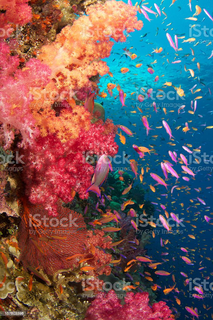 Different types of fishes at the bottom of the sea stock photo