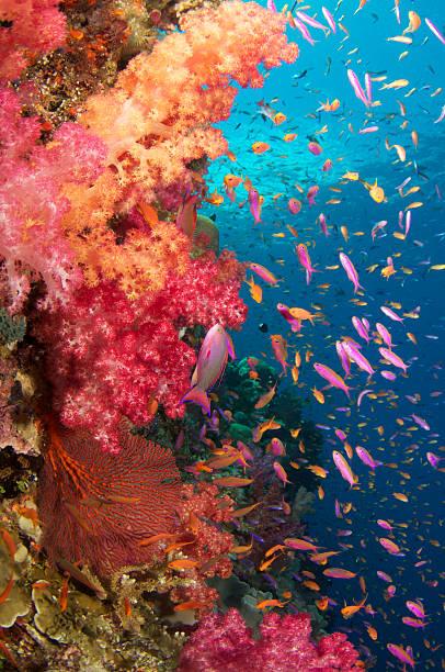 esplosione di colori - barriera corallina foto e immagini stock