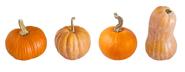 Different types of pumpkins. – Foto