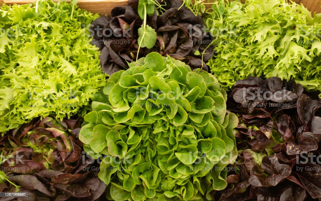 Different varieties of salad on a market stall Assortment of salads taken from above Agriculture Stock Photo