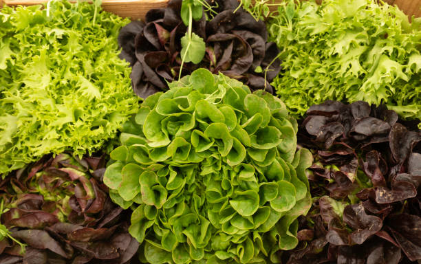 Different varieties of salad on a market stall stock photo