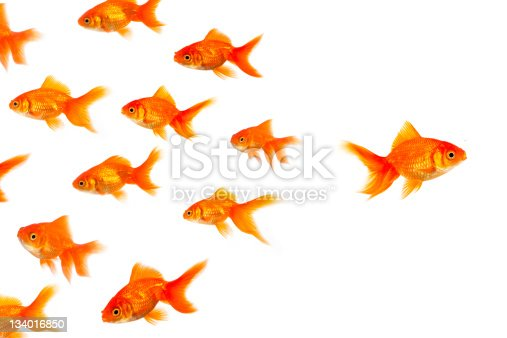 Other Goldfish photos...