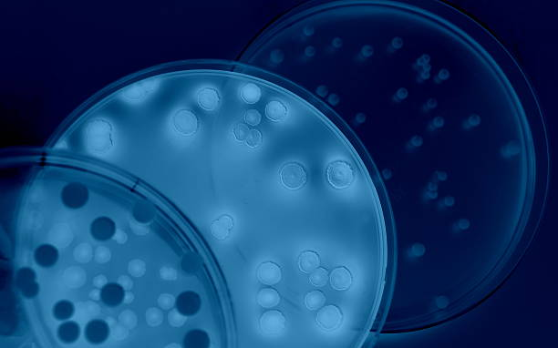 differentiation of bacteria - microbiology stock pictures, royalty-free photos & images