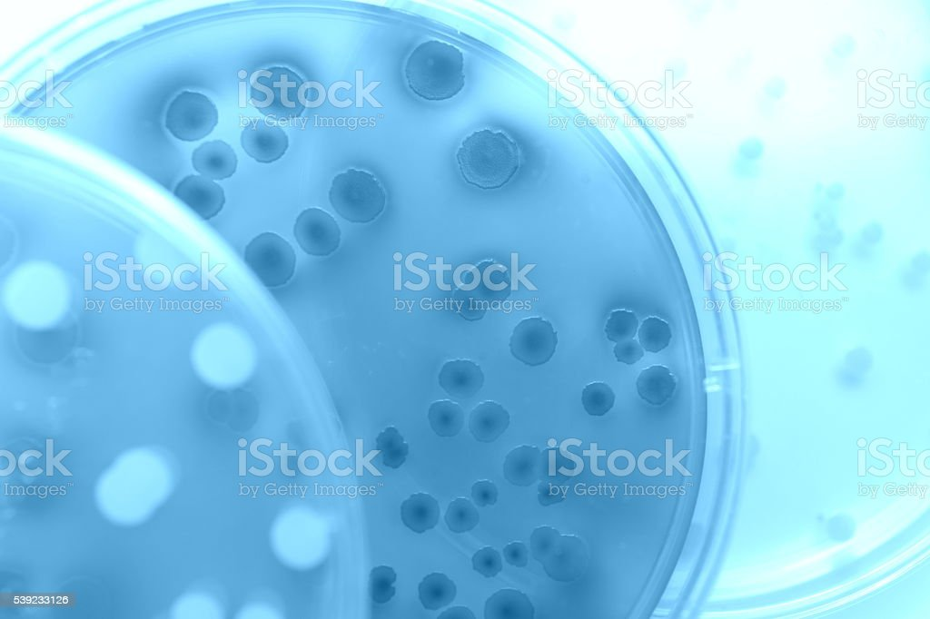 Differentiation of bacteria stock photo